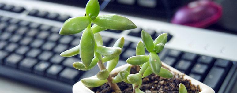 PCと植物