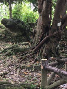 中正記念堂の野生のリス