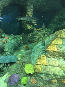 サブマリンアドベンチャーの海底