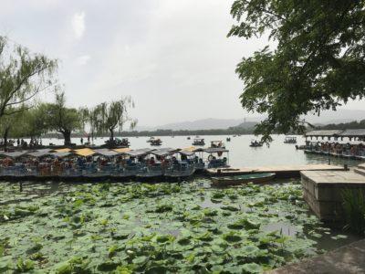 昆明湖の蓮と貸しボード